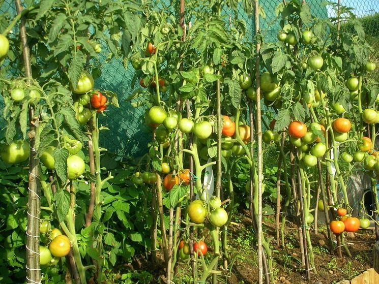 Piante orto ortaggi piante da orto for Piantare pomodori