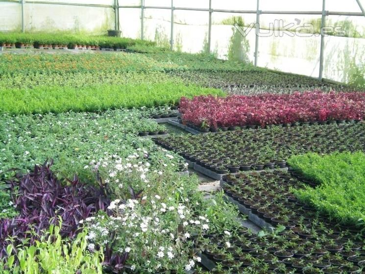 Vivaio per piante da orto