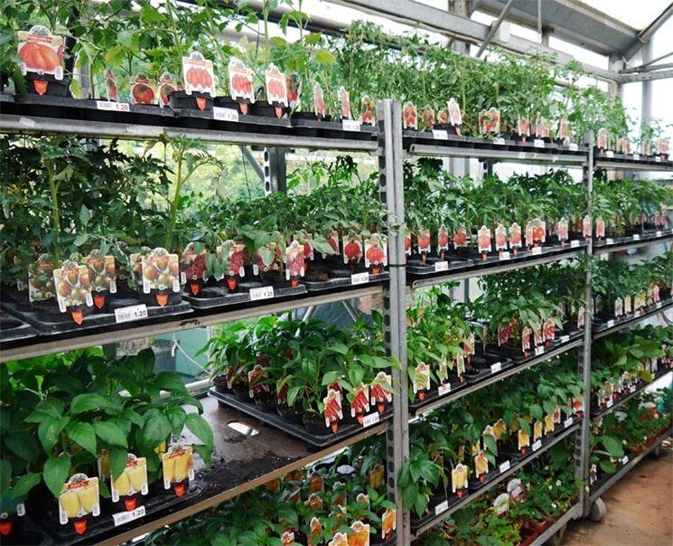 piante per orto ortaggi piante per l 39 orto