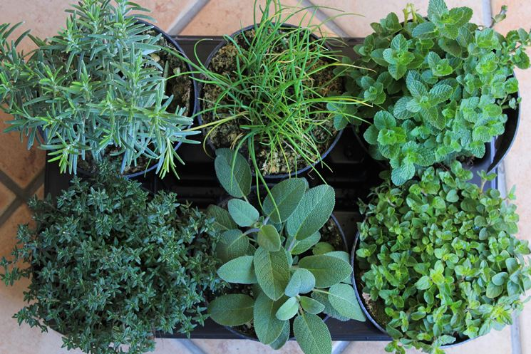 Piante aromatiche da giardino