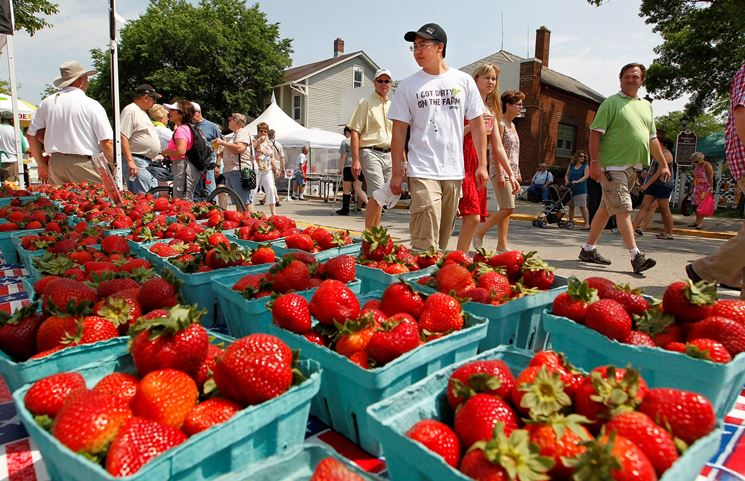 Le fragole si possono comprare: ma perch� non coltivarle in casa?