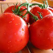 malattie pomodori macchie nere