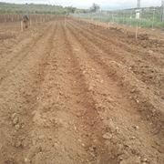 Tipico terreno per la coltivazione delle patate