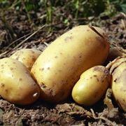 Ortaggi semina for Quando piantare l aglio