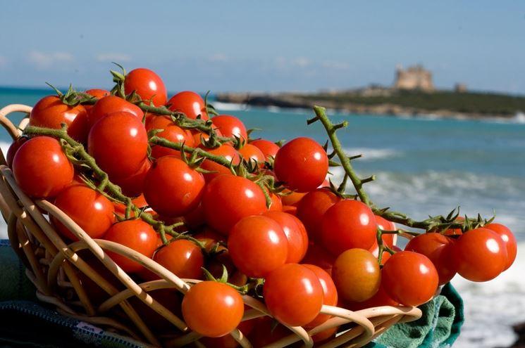 Raccolta pomodori ortaggi come raccogliere i pomodori for Scacchiatura pomodori