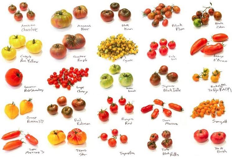 Variet� del pomodoro