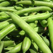 insieme di fagiolini verdi
