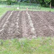 semina patate periodo