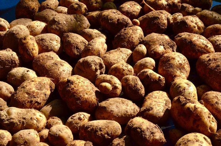 Malattie della patata