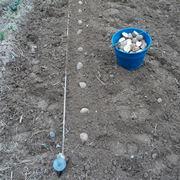 Operazioni semina patate