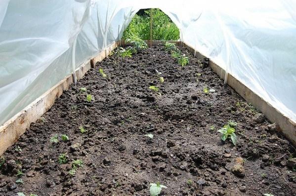 Come costruire una serra per l'orto - Idee Green