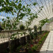 Serre orto ortaggi caratteristiche delle serre per orto - Serre da giardino usate ...