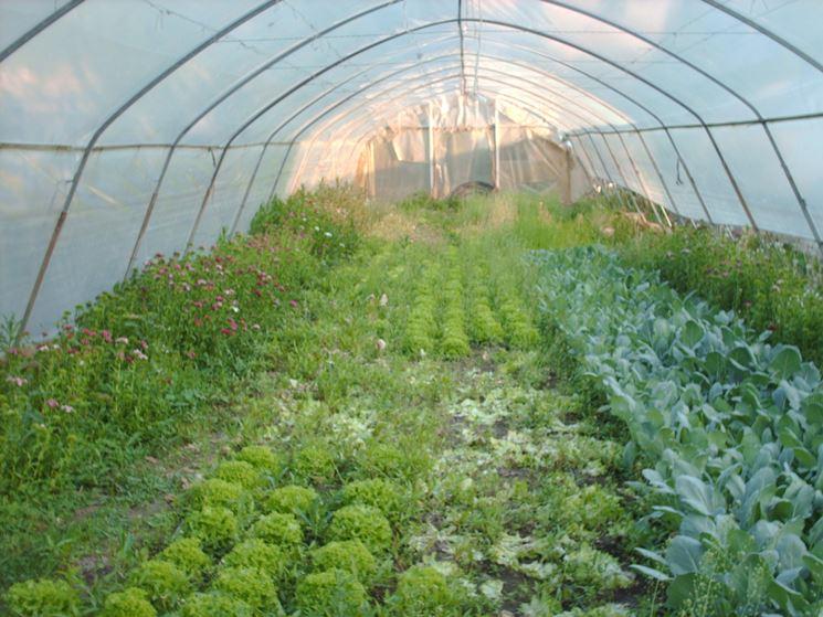 serre ortaggi verdure