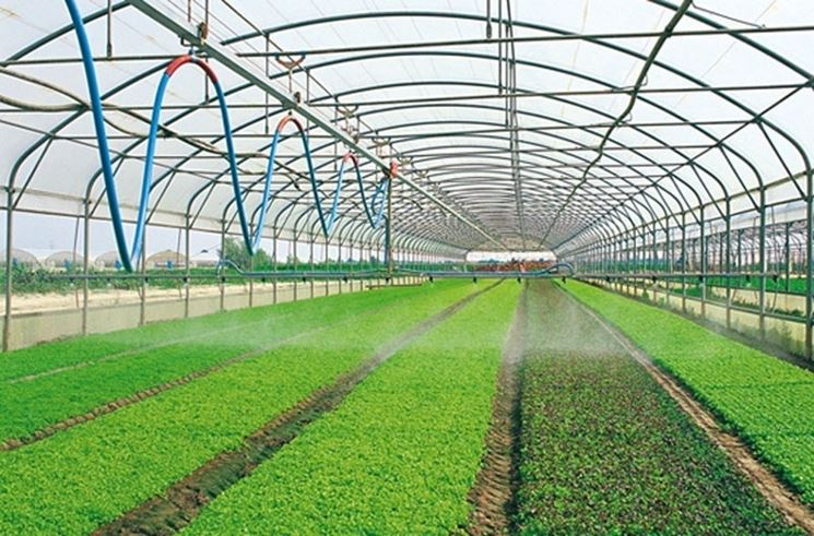 serra verdure verdi