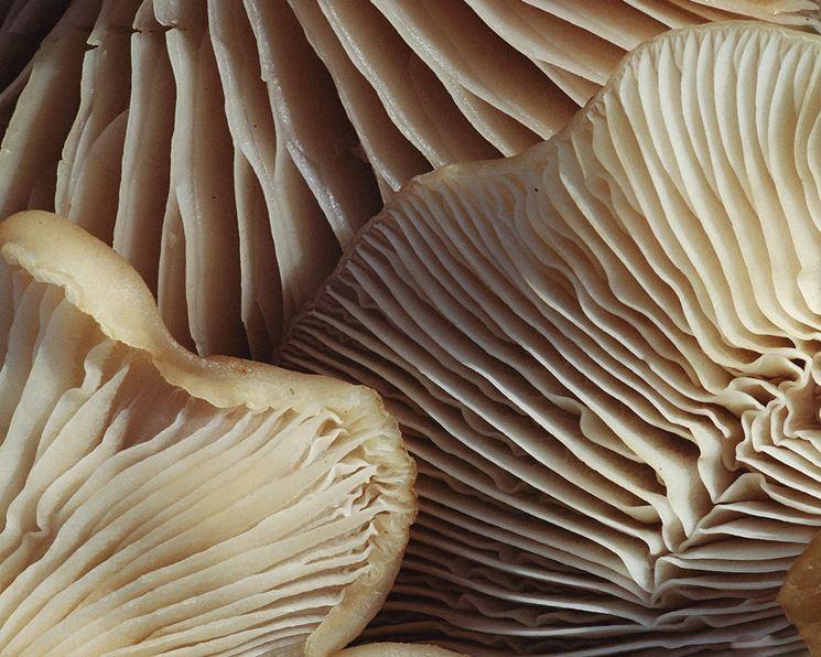 spore dei funghi sfondo