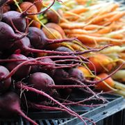 verdura invernale