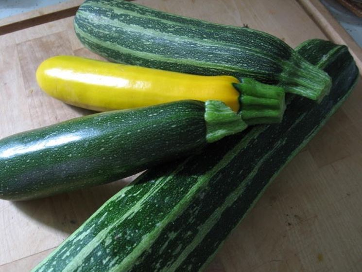 Differenti tipologie di zucchine