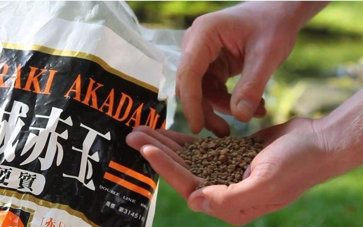 Akadama venduta in sacchi provenienti direttamente dal Giappone