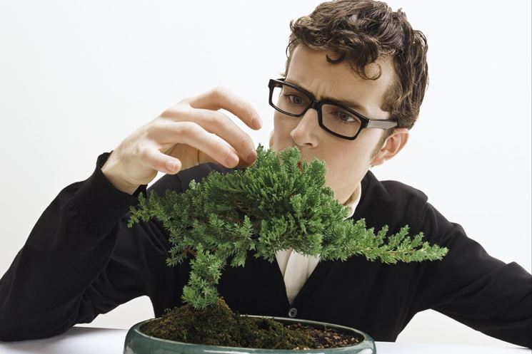 curare un bonsai verde