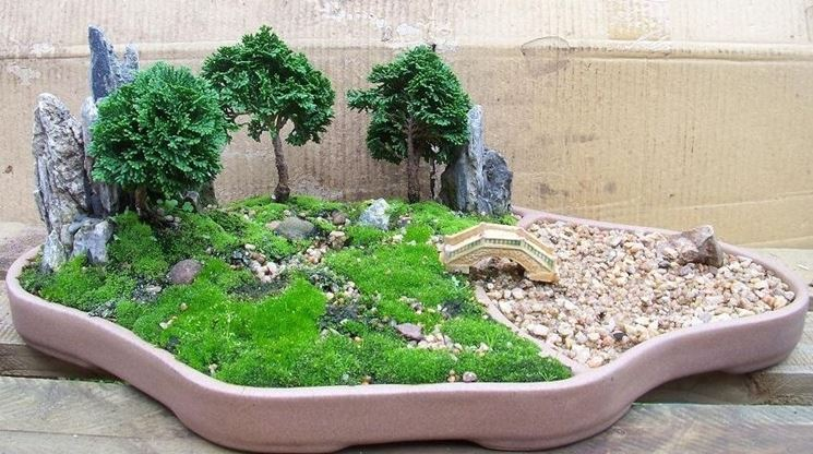 Bonsai cipresso attrezzi e vasi per bonsai come for Piante per bonsai