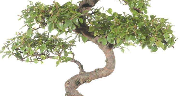 Miscela del terriccio ideale per il Bonsai