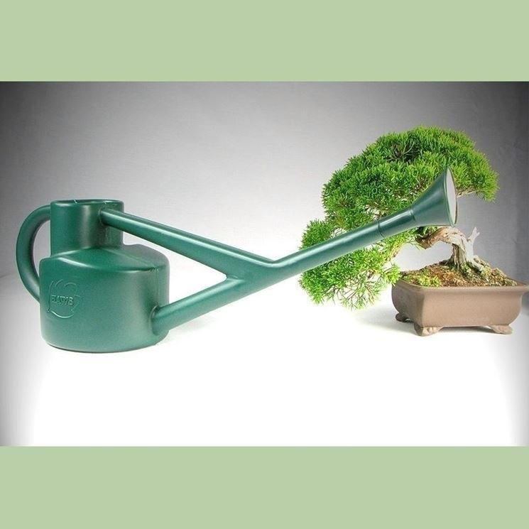 Il momento d'innaffiatura varia da bonsai a bonsai