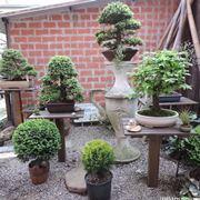 Bonsai esposti in un giardino