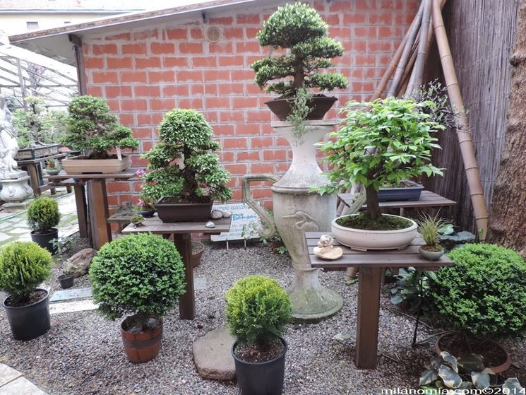 Mercatino bonsai forum attrezzi e vasi per bonsai for Bonsai vasi