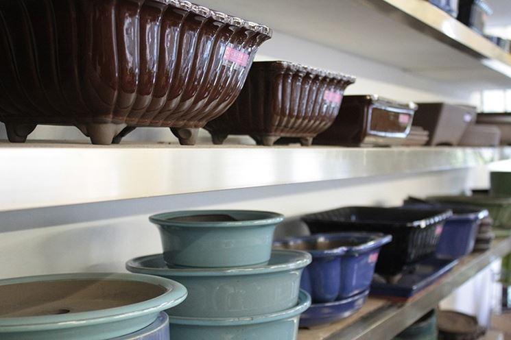 mercatino bonsai forum attrezzi e vasi per bonsai