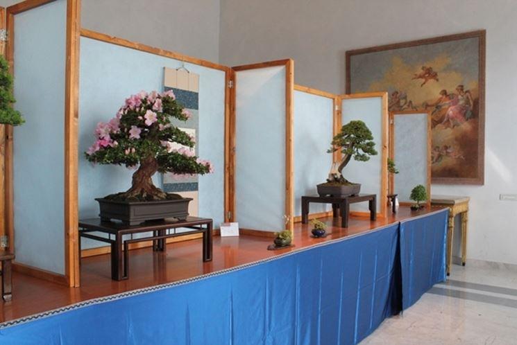 Una mostra di bonsai