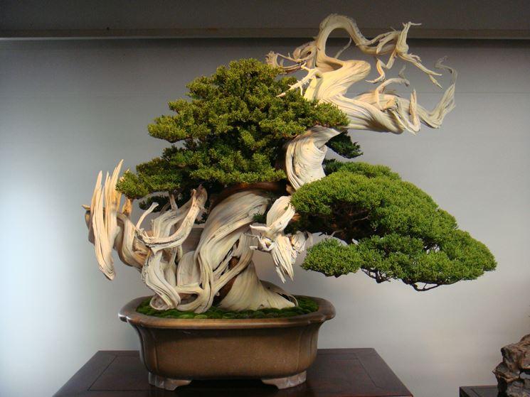 Un giardino con tanti bonsai