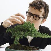 cura bonsai albero