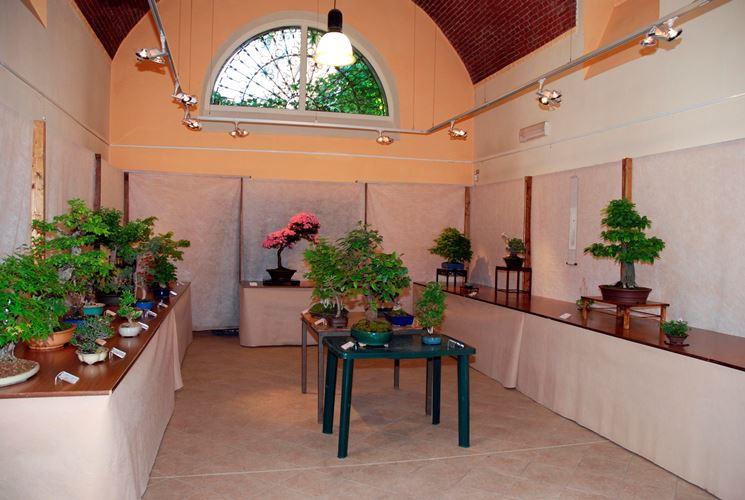 Un'esposizione di bonsai