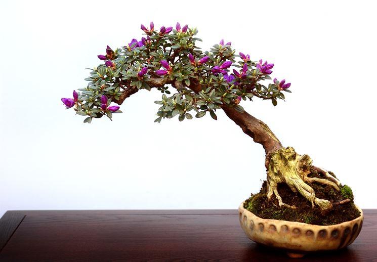 Un bellissimo bonsai dai fiori rosa