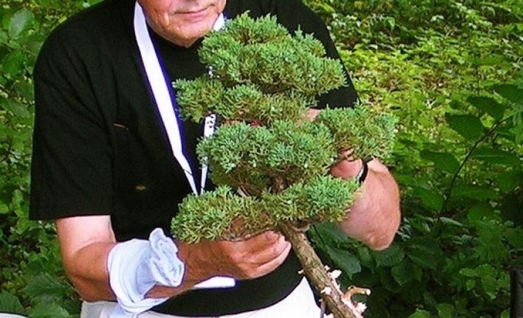 La potatura di un bonsai, operazione non semplice