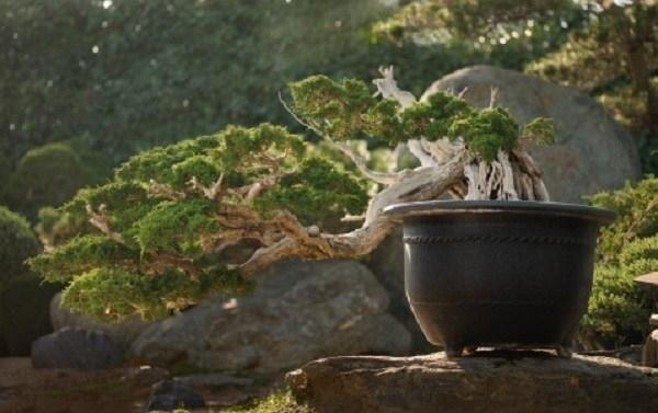 Bonsai da interno bonsai bonsai per appartamento for Cascata da interno
