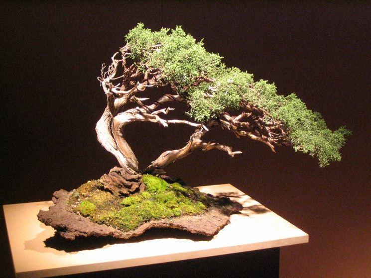Esempio di bonsai da esterno