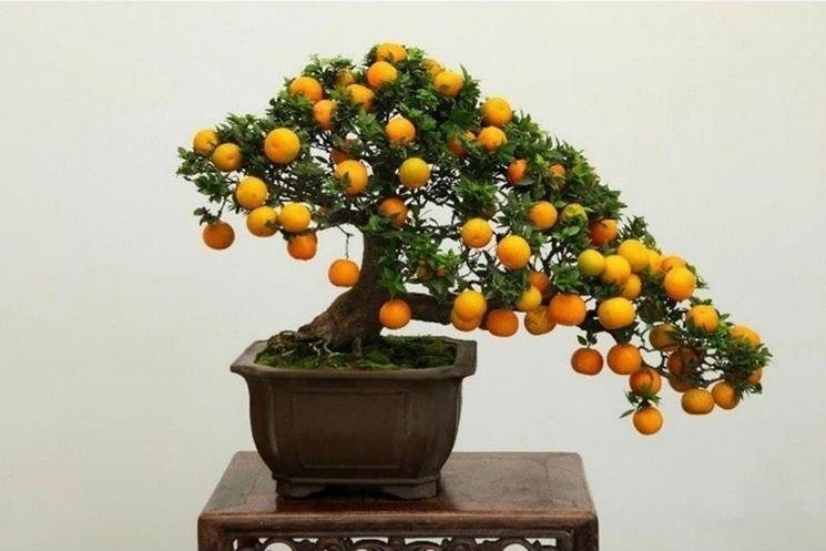 Bonsai - Albero da frutta