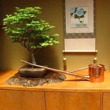 Gli strumenti migliori per innaffiare il vostro bonsai