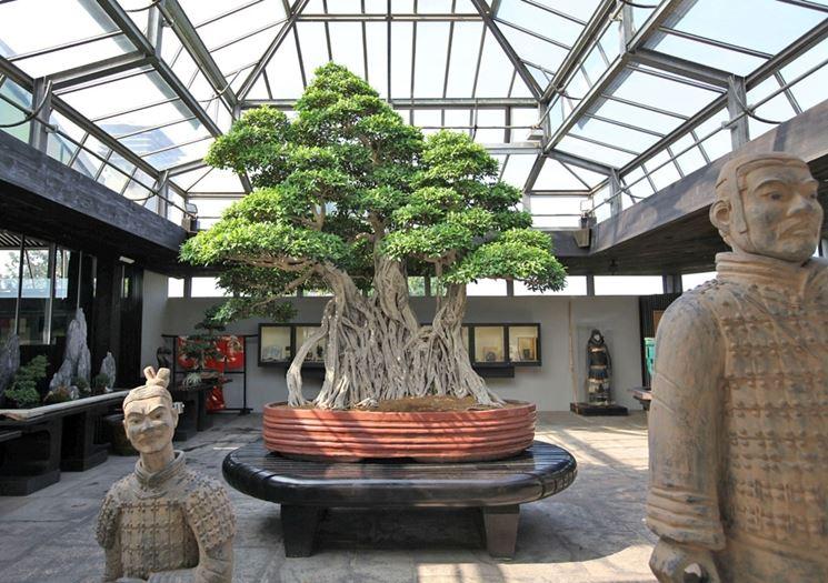 Una sala del museo di bonsai dell'azienda Crespi