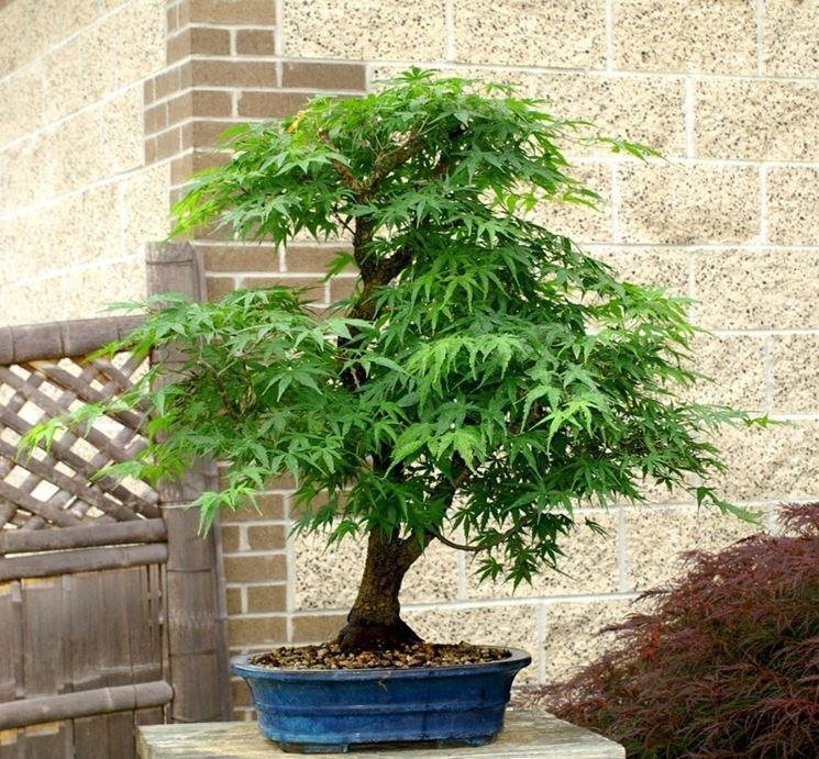 Bonsai, espressione di una cultura millenaria