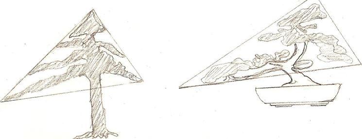 La triangolarità della tecnica bonsaistica