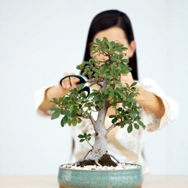 Cura di un bonsai