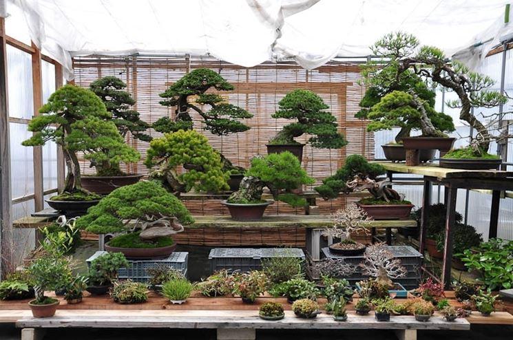 Vendita di bonsai