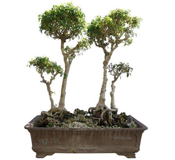 composizione bonsai