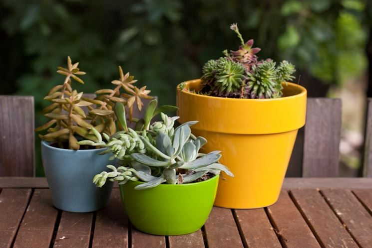 Le piante grasse da appartamento - Piante appartamento - Caratteristiche e di...