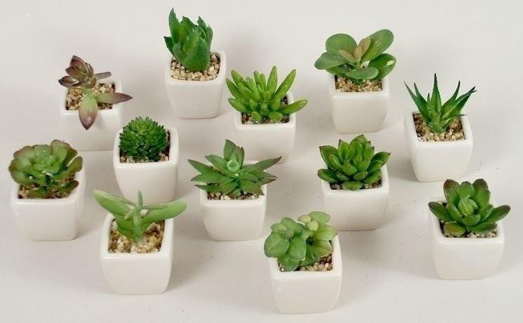 Le piante grasse da appartamento piante appartamento - Piante interno poca luce ...