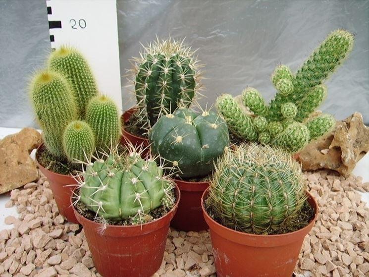 diverse tipologie di piante grasse