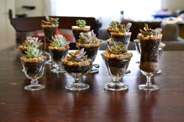 Le piante grasse all'interno di diversi bicchierini di vetro