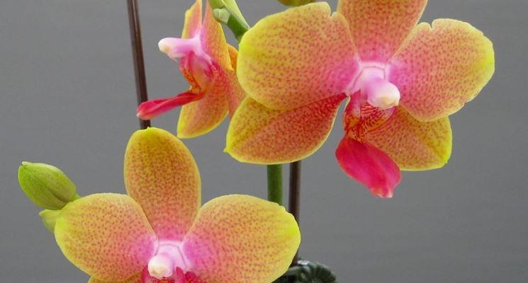 Fotografare le orchidee